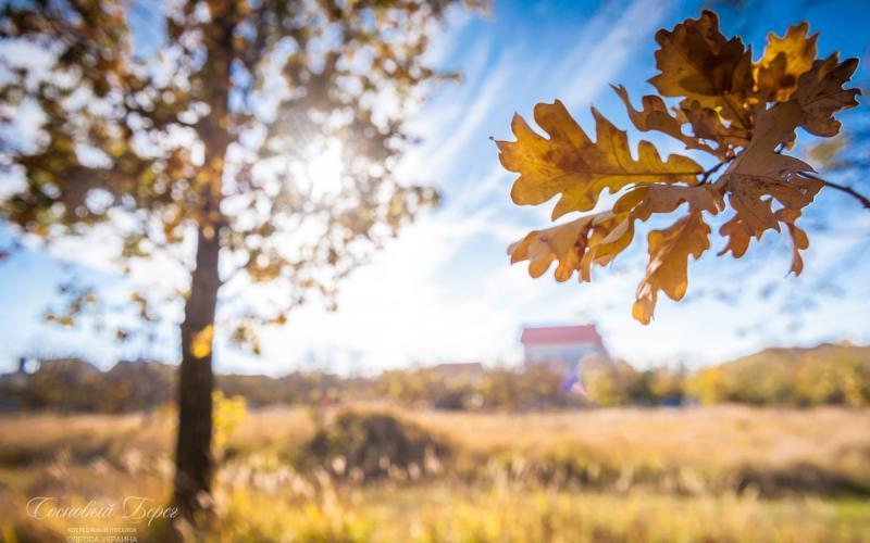 Sosnoviy Bereg - autumn 04.jpg