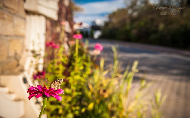 Sosnoviy Bereg - autumn 10.jpg