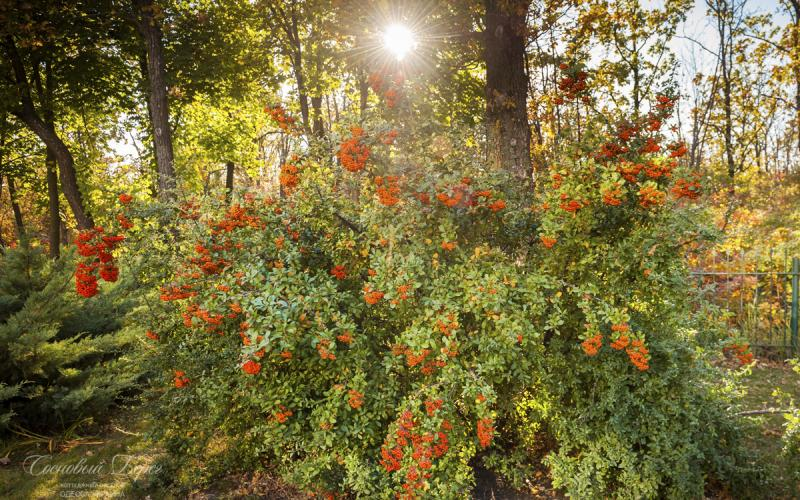 Sosnoviy Bereg - autumn 13.jpg