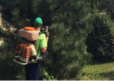 Лечение леса