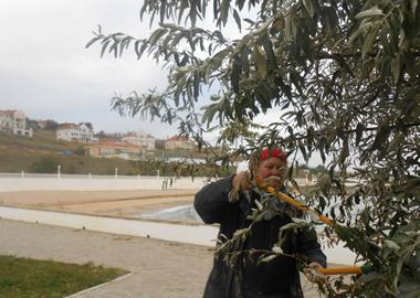 Preparation for the winter - trimming of trees
