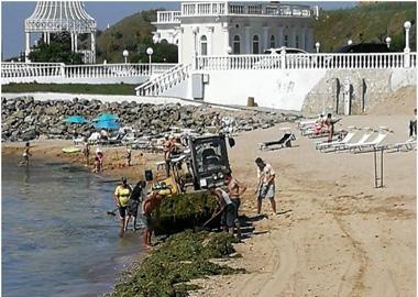 Проводится очистка пляжей от водорослей