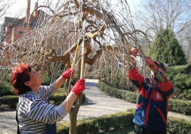 Весняна обрізка дерев